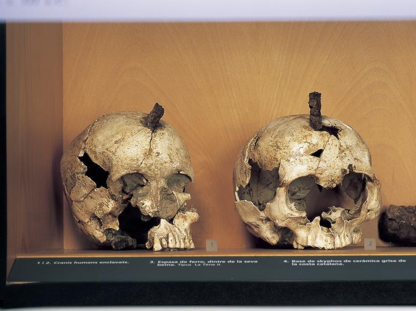 Cranis humans enclavats (segle III a.C.). Museu d'Arqueologia de Catalunya-Ullastret  (Imagen M.A.S.)