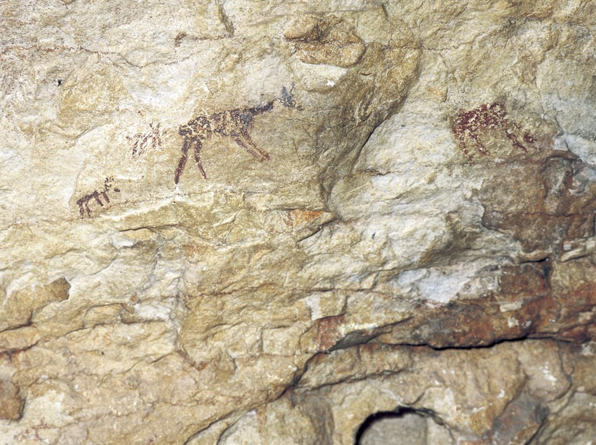Cave paintings at Cova dels Vilars