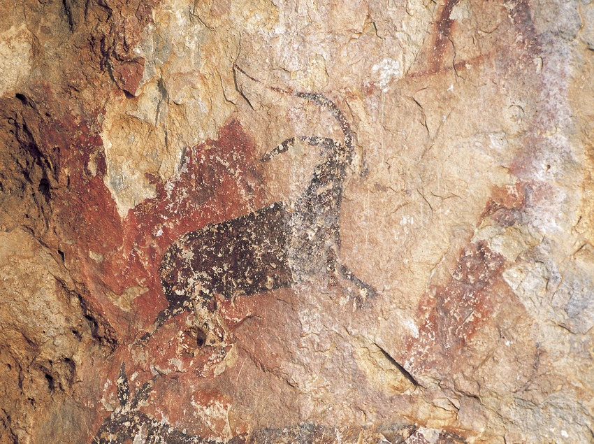 Cave paintings in the Cabra-Freixet Cave