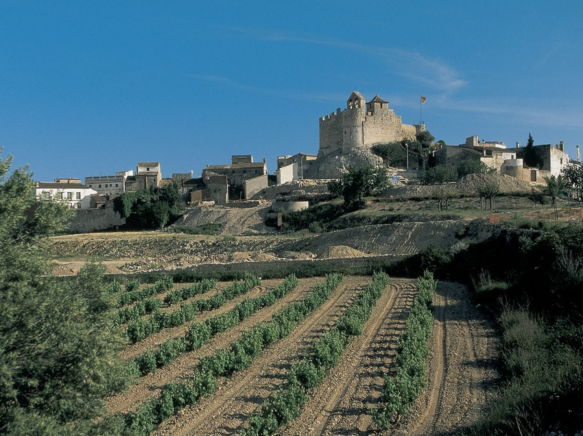 Camps de vinyes i ciutadella ibèrica amb el castell de la Santa Creu al fons