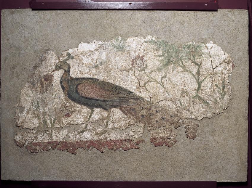 Detall d'un mosaic amb un paó (segle II-III d.C.). Museu Nacional Arqueològic de Tarragona.  (Imagen M.A.S.)