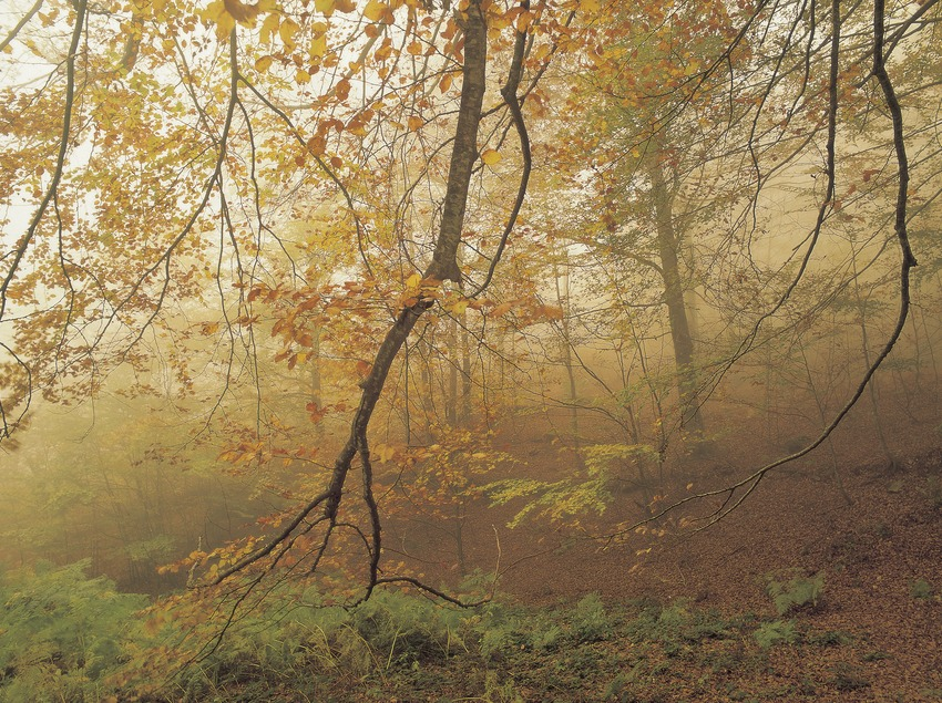 Autumn in the woods of Santa Fe del Montseny