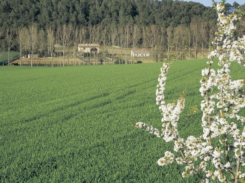 Camps de conreu a Can Pigem.  (Turismo Verde S.L.)