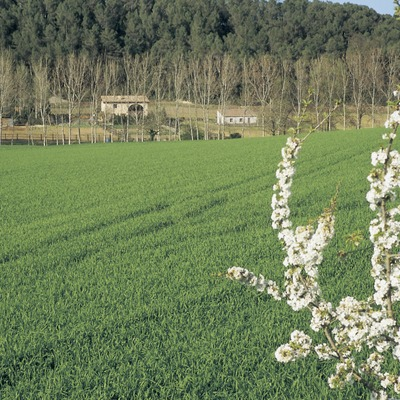 Campos de cultivo en Can Pigem.  (Turismo Verde S.L.)