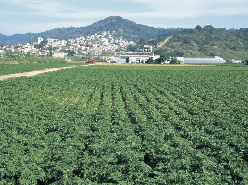Cultivo de fresas.  (Turismo Verde S.L.)