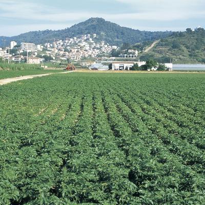 Cultiu de maduixeres.  (Turismo Verde S.L.)