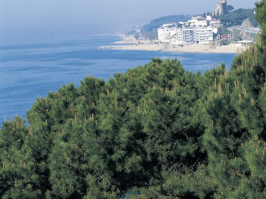Árboles en un acantilado a ras de mar.  (Turismo Verde S.L.)