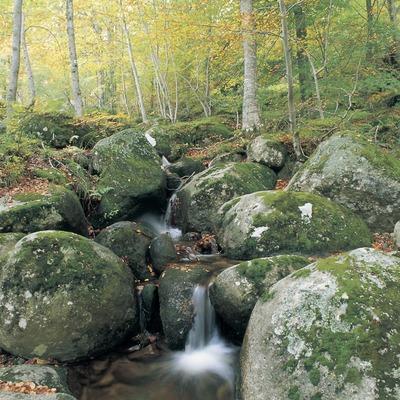 Rierol en una fageda del Montseny  (Turismo Verde S.L.)