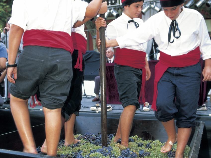 Fiesta de la vendimia.  (Turismo Verde S.L.)