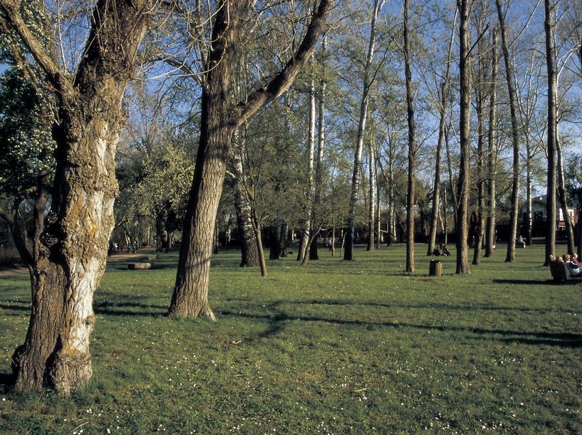 Bosque de ribera en el lago de Banyoles.  (Turismo Verde S.L.)