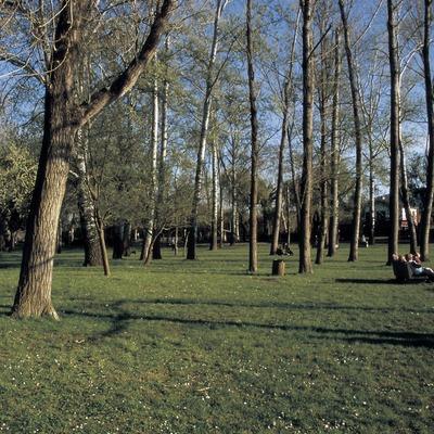 Bosc de ribera a l'estany de Banyoles.  (Turismo Verde S.L.)