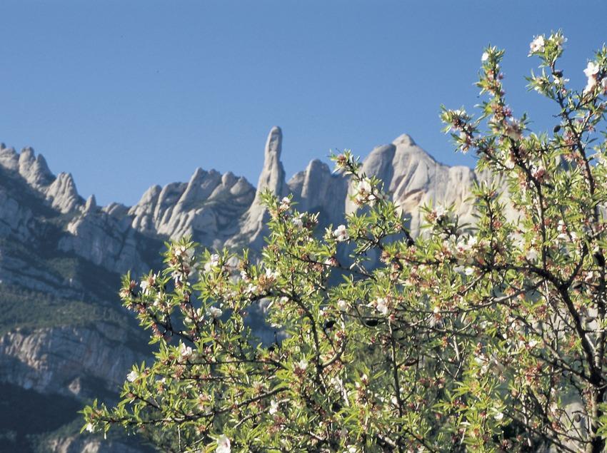 Macizo de Montserrat.  (Turismo Verde S.L.)