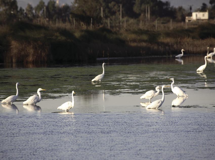 Oiseaux dans le parc naturel du delta de l'Èbre