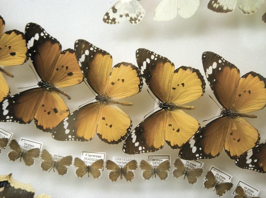 Museum of butterflies of Catalonia  (Servicios Editoriales Georama)