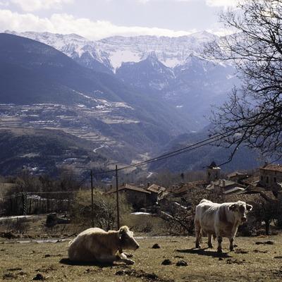 Geier und das Dorf Travesseres, im Hintergrund die Sierra del Cadí
