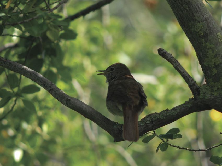 Pájaro en el Parque Natural de Aiguamolls de l'Empordà.