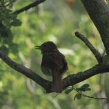 Ocell al Parc Natural dels Aiguamolls de l'Empordà.  (José Luis Rodríguez)