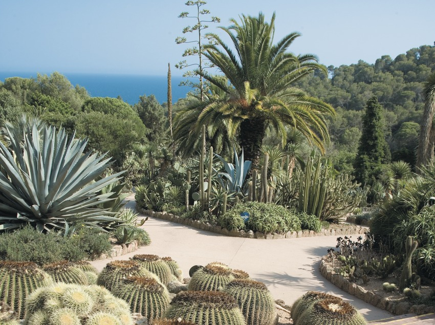 Cactus in the botanical garden Pinya de la Rosa  (Servicios Editoriales Georama)