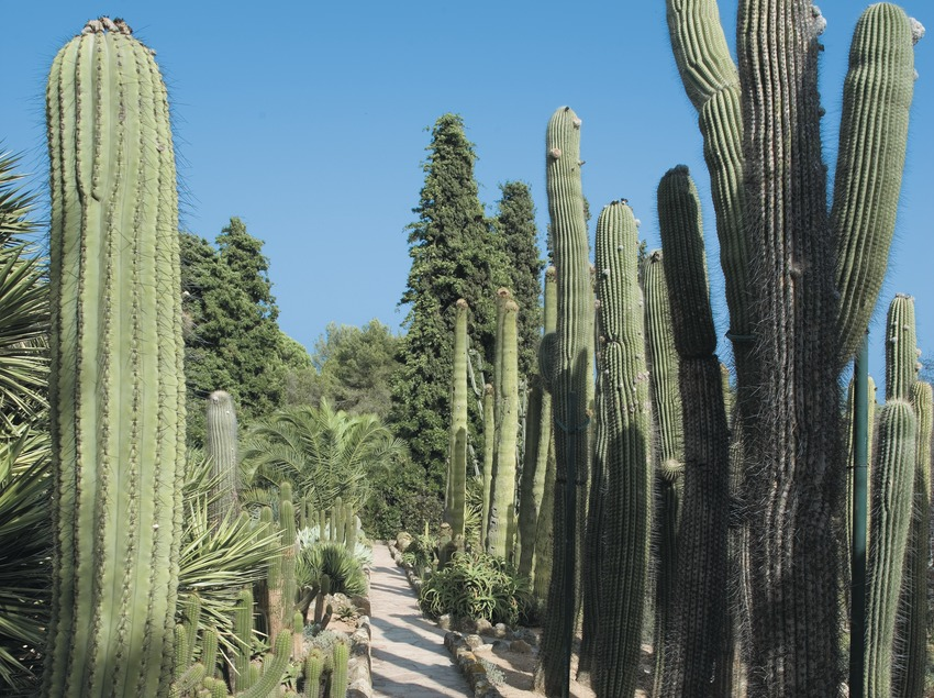 Kaktus im botanischen Garten Pinya de la Rosa  (Servicios Editoriales Georama)
