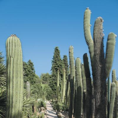 Cactus al jardí botànic Pinya de la Rosa  (Servicios Editoriales Georama)