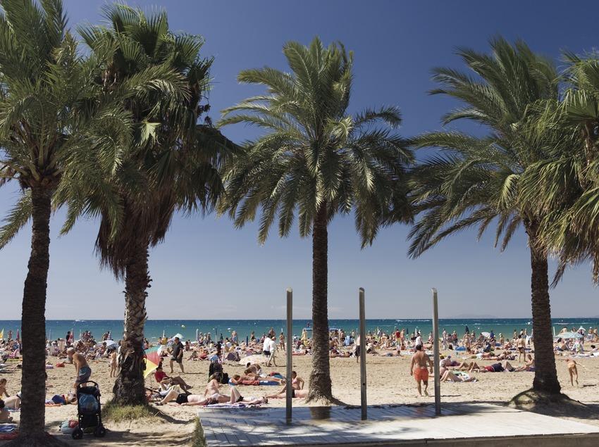 Palmen am Strand.