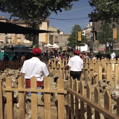 Concurso de esquila de ovejas durante la Fiesta de la Lana y del Casamiento en el campo.  (Oriol Llauradó)