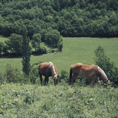 Alpine Wiesen im Val d'Aran