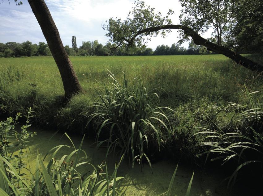 Parc Natural dels Aiguamolls de l'Empordà.  (José Luis Rodríguez)