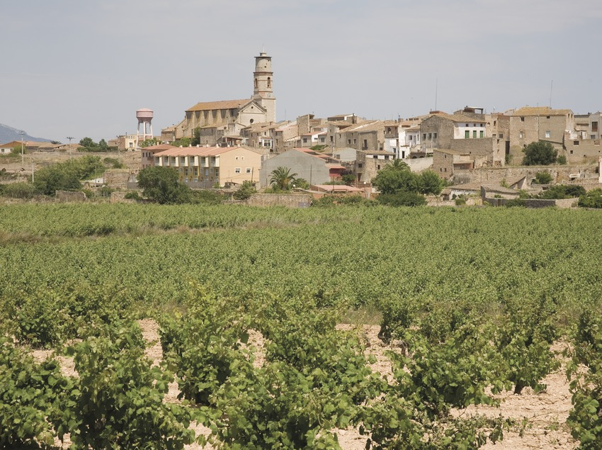View of the town with vineyards  (Miguel Raurich)