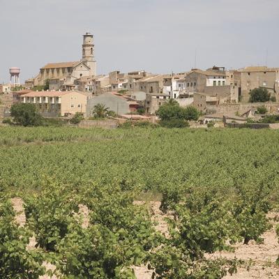 Vista de la localitat amb vinyes  (Miguel Raurich)