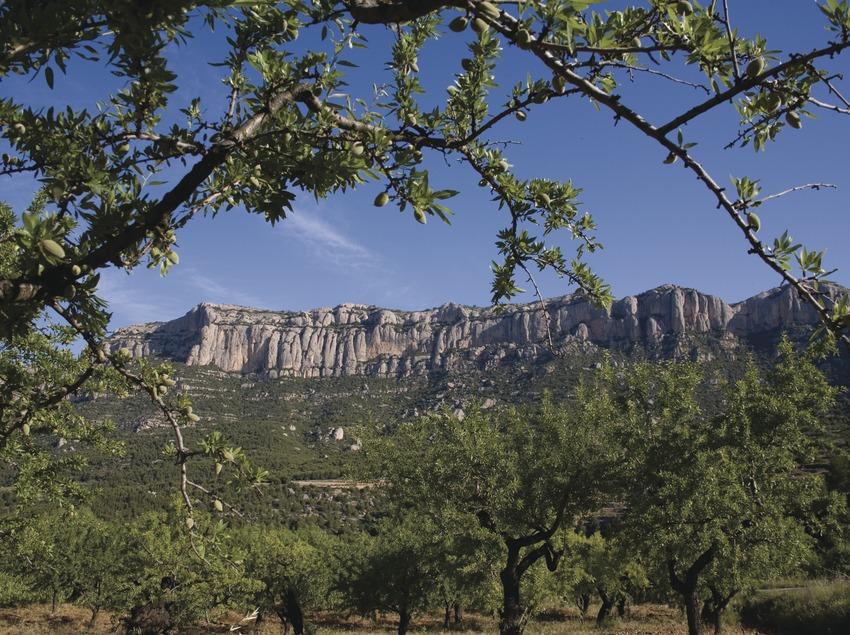 Almendros y Parque Natural de la Sierra de Montsant (Miguel Raurich)