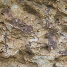 Escena de caza, pintura rupestre en l'Abric I d'Ermites
